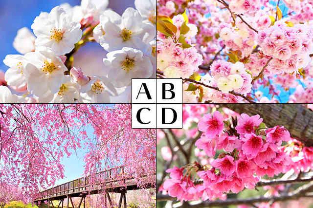 桜心理テスト
